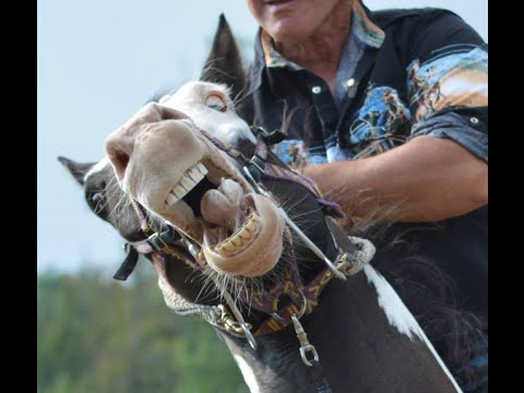 Horse Abuse - Pressure & Draw - Training Spooky Horse- Dangerous Kids on Horses