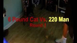 Crazy Cat Attacks !!!!