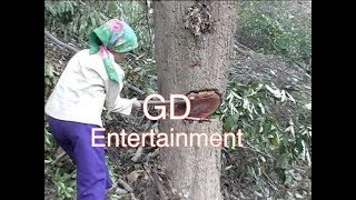 Ua Teb #12 Part 1 from GD Entertainment