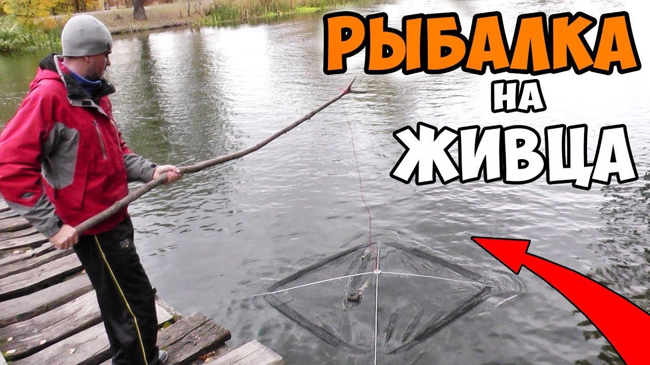 рыбалка на живца кто живец