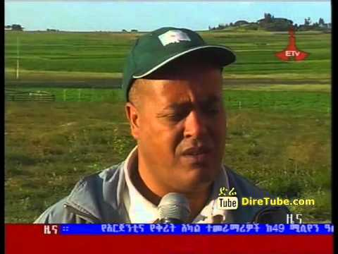 ETV 1PM Full Amharic News - Oct 13, 2011