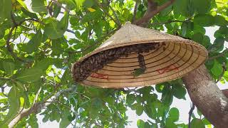 """Bắt ong mật nghĩ cánh trên cây về nuôi lấy mật """"săn bắt giải trí vlogs """""""