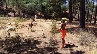 alien alimentando a un ciervo y a un gato