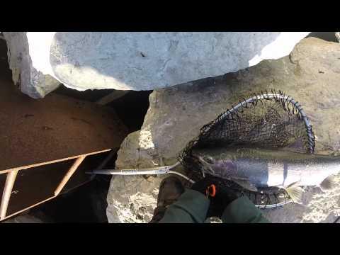 Milwaukee steelhead fishing
