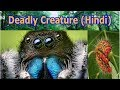 5 Deadliest Insects On Earth | Hindi