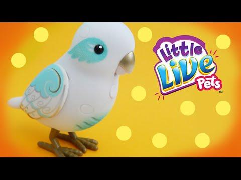 Little Live Pet Tweet Talking Bird Angelic Angela Moose Toys Review