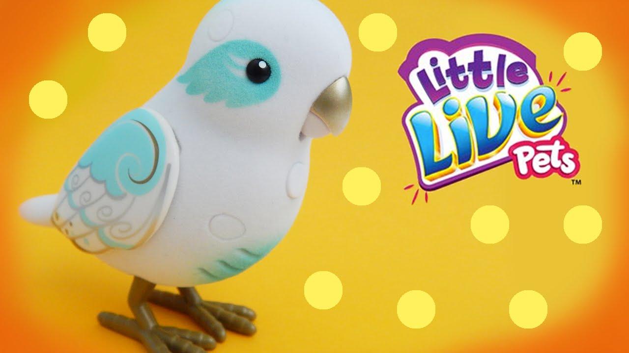 Bird Talking Toy : Talking bird toys adult webcam movies