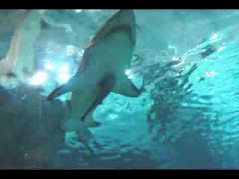 Mall Of America Aquarium Youtube