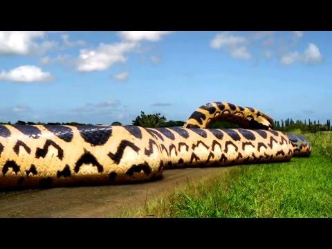 10 Especies de Serpientes Que No Sabías Que Existían
