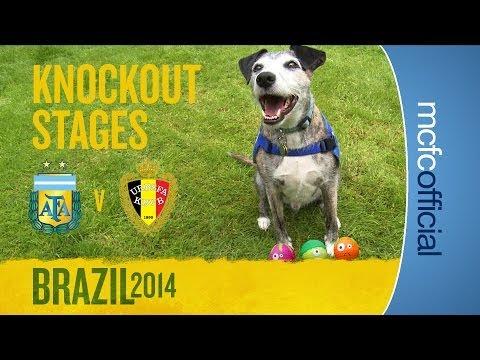 DOUGIE THE DOG PREDICTS | Argentina v Belgium Quarter Finals | World Cup Predictions