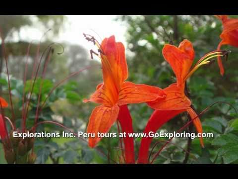 Peru Travels with Explorations Inc. to Lima & South Coast - GoExploring.com