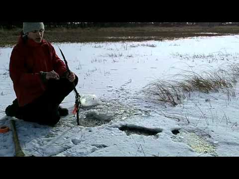 muskrat trapping in winter
