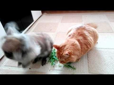 Dieta; Zdrowe Odzywianie; Fit Kot :)
