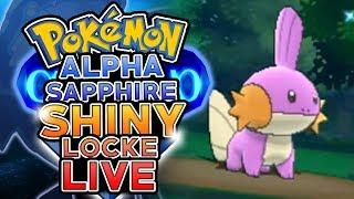 LIVE SHINY MUDKIP SOFT RESETTING! Pokemon Alpha Sapphire ShinyLocke Shiny Hunting w/ HDvee