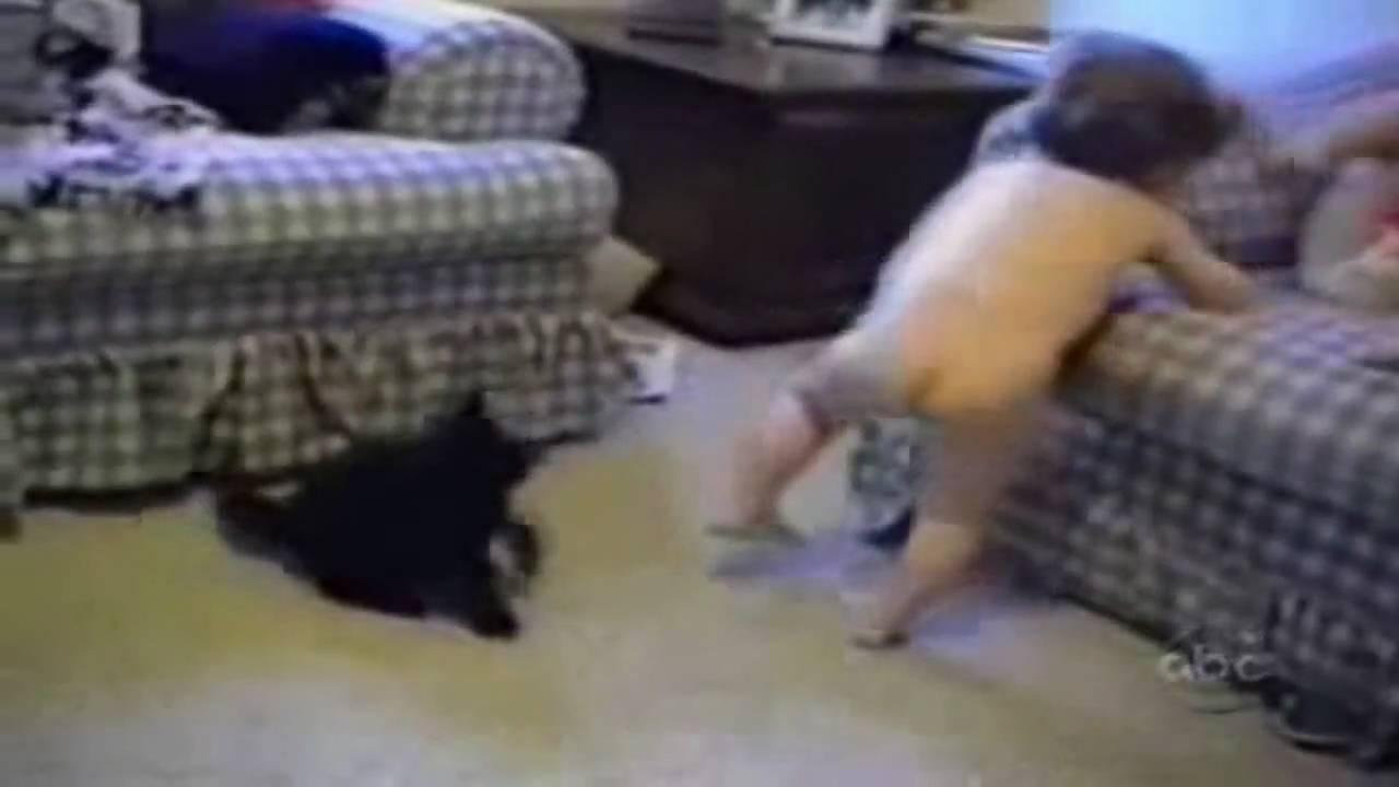 Funniest Cat Site Youtube Com