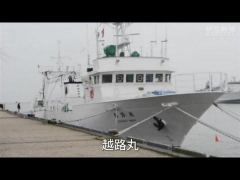 トキべい飛んでって 新潟県水産海洋研究所へ潜入