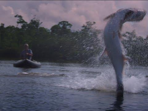 Pesca de gigantes