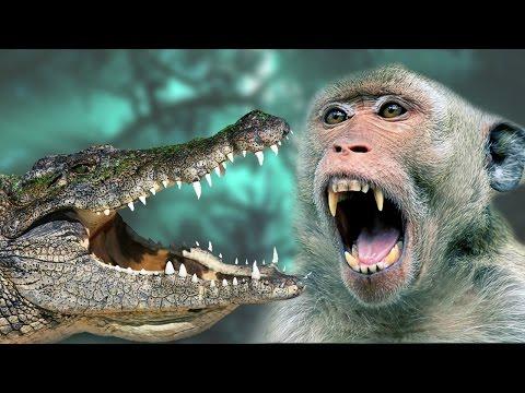 Monkey vs Crocodile - A Monkey Tried to save their child from Crocodile
