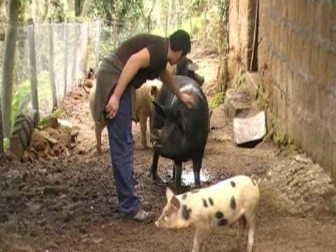 Il Rapporto Tra L'uomo E L'animale video