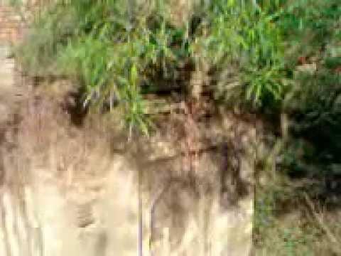गोरखपुर ३७ मंदिरो के समूल नस्ट करने कि कोशिश कि गई जिलाधिकारी तहसीलदार  पुलिश देखे और जबाब video