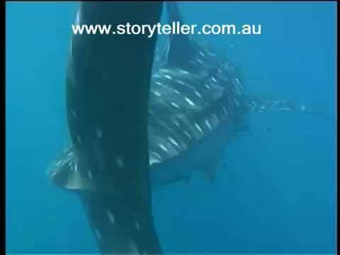 Part 1 Whale Shark Gypsy of the Deep
