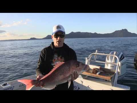 Milwaukee Fishing and Adventure Ep #1 - Whangarei O Te Kaimoana