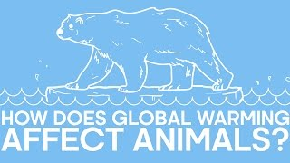 How Does Global Warming Affect Animals? - Earth Unplugged