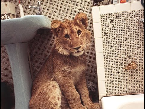 Christian the lion Video