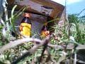 ทดสอบความแม่นของปืนอัดลมไทยประดิษฐ์ 2/2