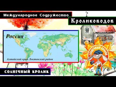 Кролики Алтайский край Локтевский район (Россия)