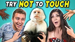 Try Not To Touch Challenge #7 (ft. Tara The Monkey!)