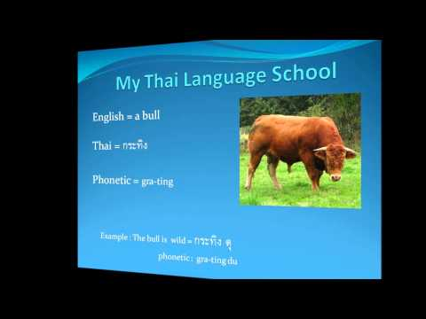 88 My Thai Language School : Lets learn about animals in Thai
