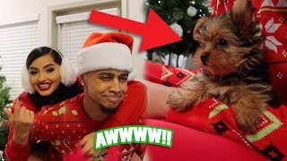 NEW PUPPY!! DECORATIONS, & HOW TO MAKE A VIRAL VIDEO!! (VLOGMAS 2)