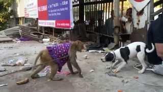 Monkey vs Dog Friendly Fight