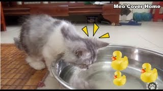 Cats to Enjoy Duck Rubber So Funny | Funny Cat And Water | Meo Cover Home