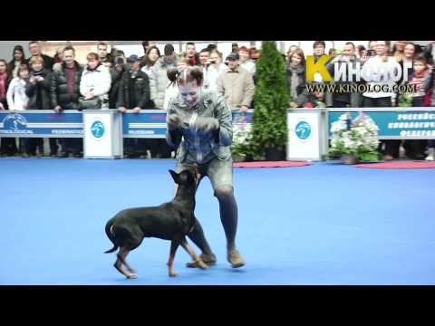10 Dog Show Eurasia  2012 / Russia / Moscow. Freestyle.
