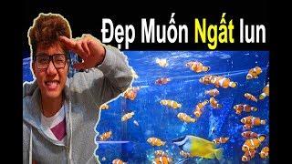 Đi Thăm Quan Tiệm Cá Cảnh, Thú Cưng Ở Thành Phố Newport New  🐠 Ryan Nguyen_The Fish Lover
