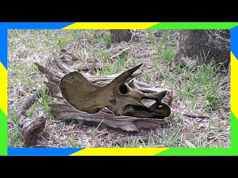 DINOSAUR BONES FOUND??!! | MOUNTAIN BIKE RIDE | GUANA RIVER STATE PARK