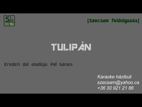 Szecsam - Tulipán