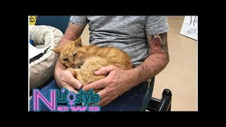 Lost cat returns home 14 years after hurricane