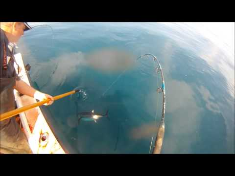 Wide Open Albacore Fishing