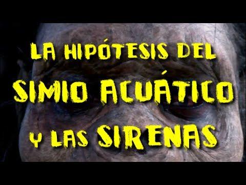 La hipótesis del simio acuático y la posibilidad de las sirenas