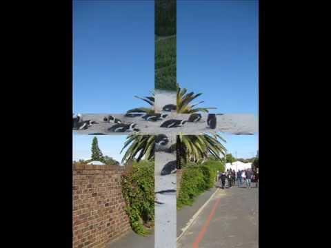 De grote reis naar Zuid Afrika nov, 2011