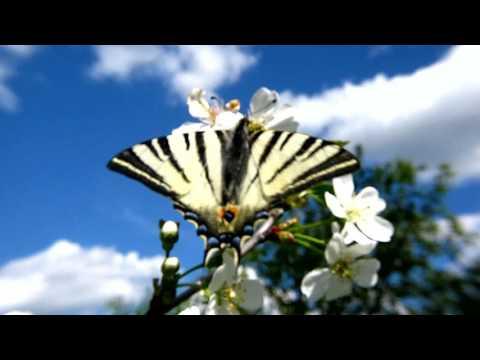 Богуслав Мартину - Весна в саду