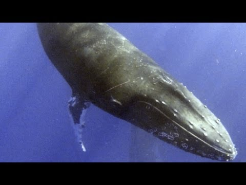 Close Encounter with a Curious Whale while Kayaking- proper aspect ratio