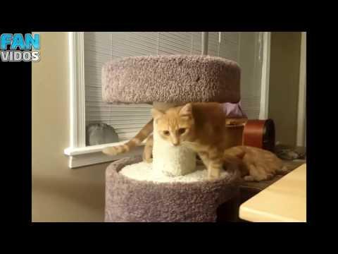ПРИКОЛЫ С КОТАМИ СМЕШНЫЕ КОТЫ FUNNY CATS ТОПовая подборка 2017 ПРИКОЛЫ С КОШКАМИ Смешные моменты