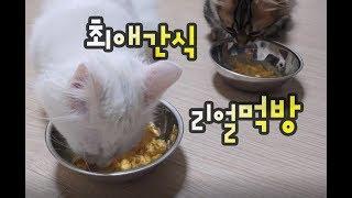 고양이가 좋아하는 최애간식 먹방(ASMR)과 사랑스런 그루밍 Cats love snack time and lovely grooming 猫が好きなおやつタイムと最愛のグルーミング