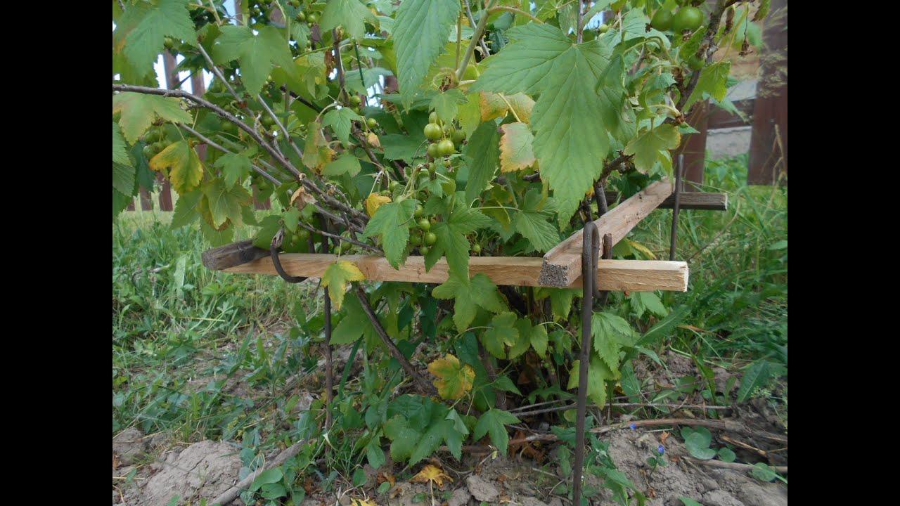 Ограждение ягодных кустарников - для выделения сортовых 71