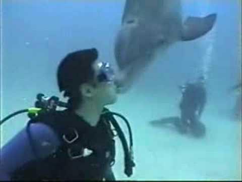 スキューバダイビングでイルカに手で触れたりキスしたり