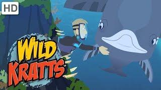 Wild Kratts 🐋 Whale Watching | Kids Videos